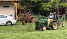 erdőtakarítás