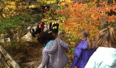 Őszi erdő és ragyogó napsütés
