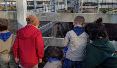 A cserkészek etettek szamarat, kecskét, birkát, nyuszit...
