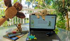 Az online tanítás világa