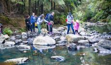 Patakon átkelés, ami soha nem váratlan Új-Zéland erdőiben