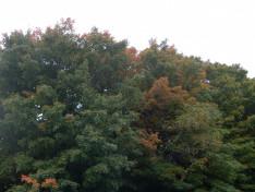 Ősz Québecben