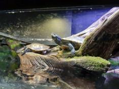 Teknősbékák