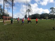 focibajnokság