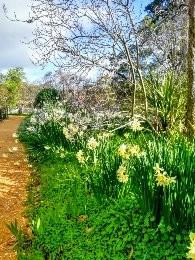Buda Ház kertje várja a tavaszt
