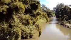 Jaraguá folyó