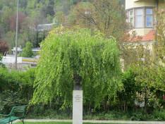 Széchenyi vigyázó tekintete az innsbrucki Magyarház kertjén
