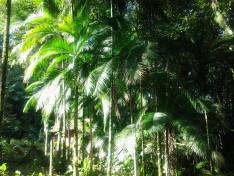 Ősnövényzet