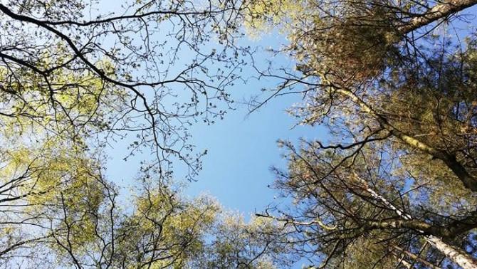 Égig érő fák között