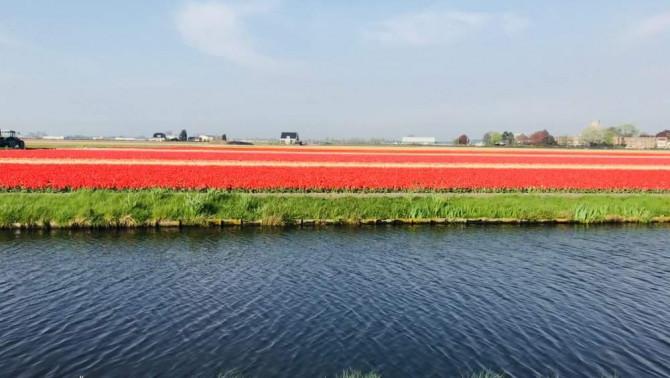 Üdvözlet Hollandiából