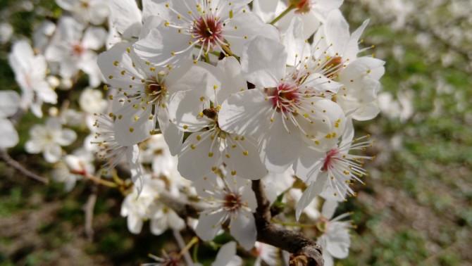 A tavasz Bolognában
